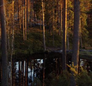 skog-m-vatten